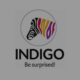 Indigo Paints made the bumper stock market start-up, which included 75% premium
